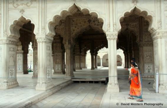 Delhi Bright Sari